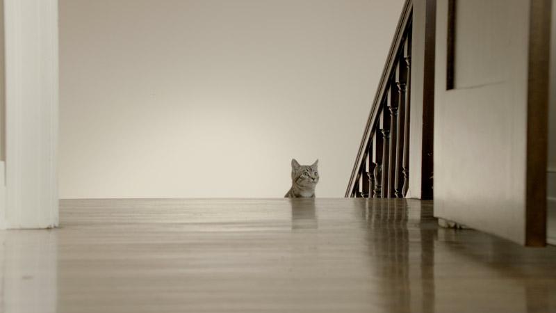 NAT GEO WILD – BIG CATS WEEK